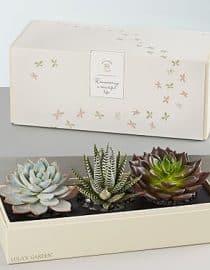 Kaktus box