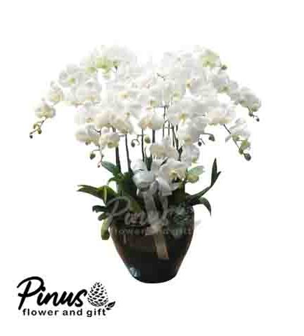 Home Bunga Meja - Orchid Diamond