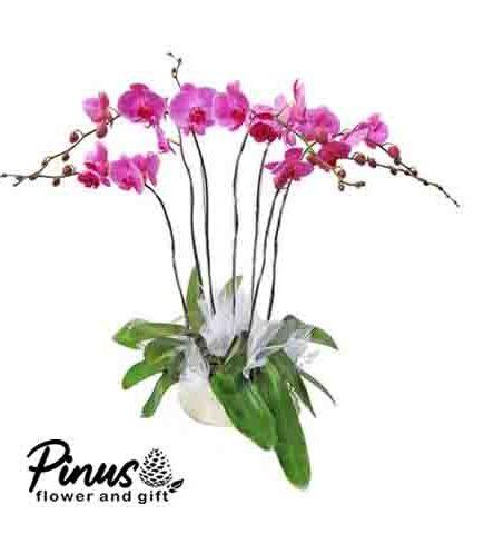 Home Bunga Meja - Orchid Soft Flower
